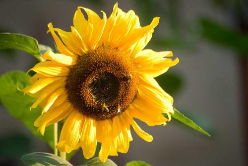 mit-3-Bienen-DSC00413